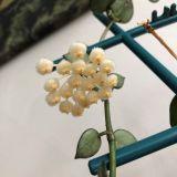 Blüten 2019 D3qpnucj